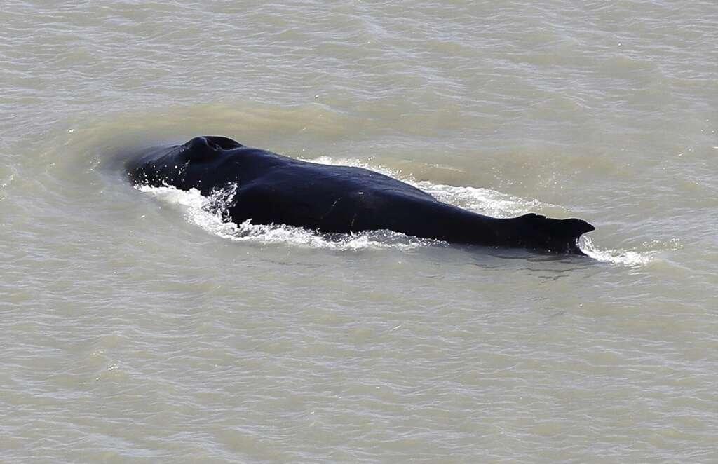 Whale, crocodile, Australian river