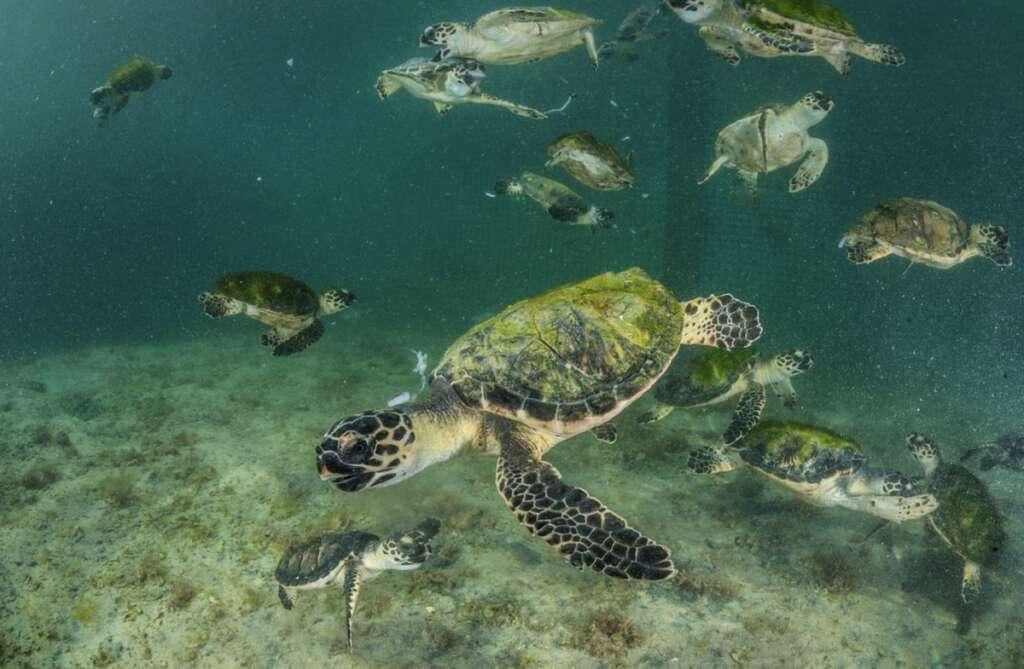 Largest, sea turtle, rehab facility, region, coming up, Abu Dhabi