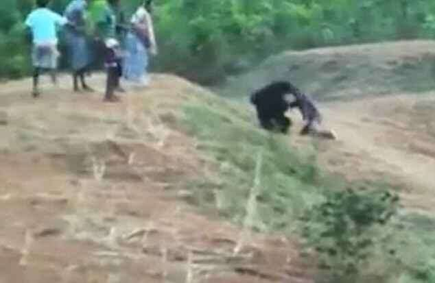 Video: Man dies while trying to take selfie with bear - Khaleej Times
