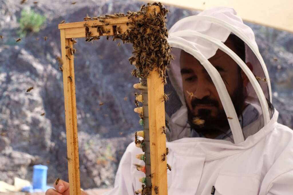 Hatta home to first queen bee rearing station in Middle East