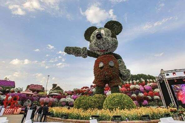 The worlds tallest Mickey Mouse floral structure was unveiled at the Dubai Miracle Garden to mark the 90th anniversary of Mickey Mouse.-Neeraj Murali/ Khaleej Times