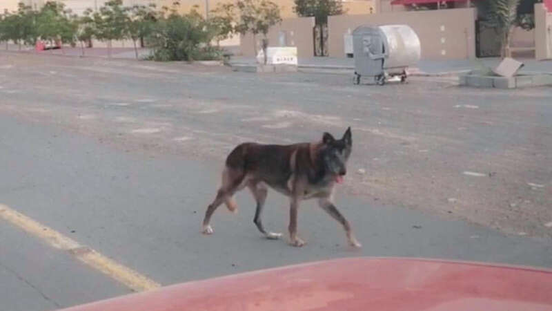 Wolf spotted on UAE road? Municipality issues statement