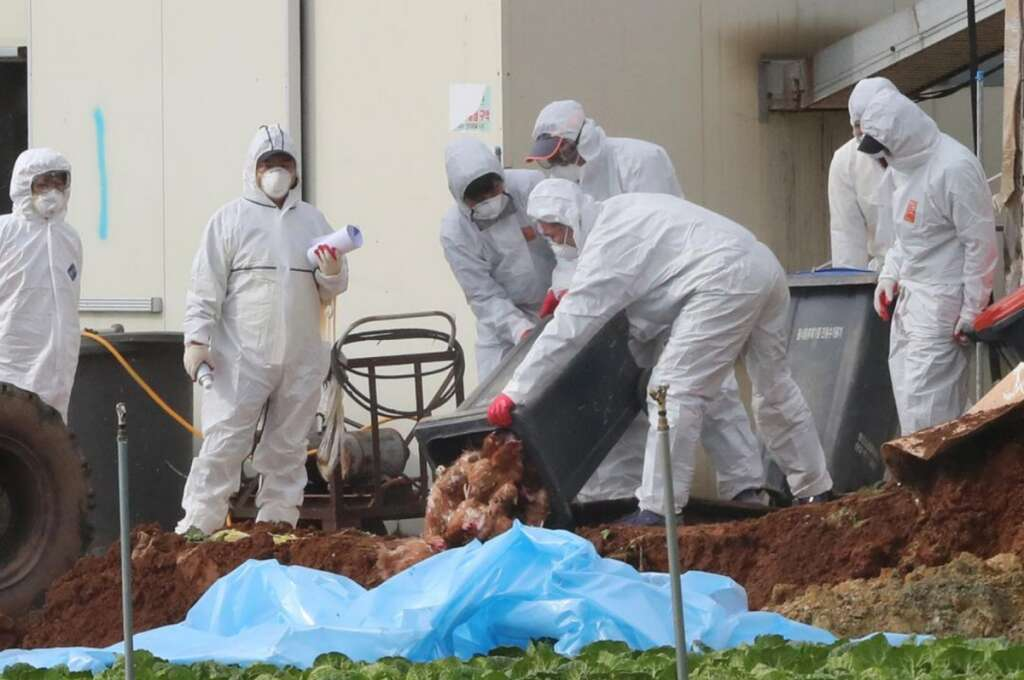 agriculture ministry, H5N6 bird flu