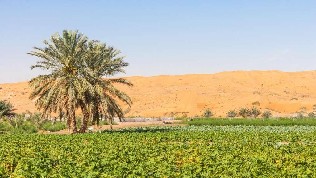 abu dhabi, uae, farm, agricultural land, house, accommodations, farmers