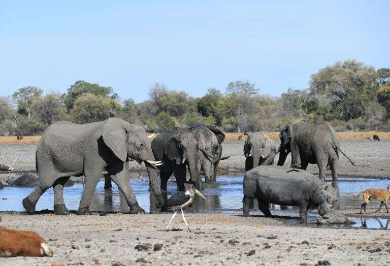 Hundreds, elephants, died, mysteriously, Botswana, Africa, Okavango Delta