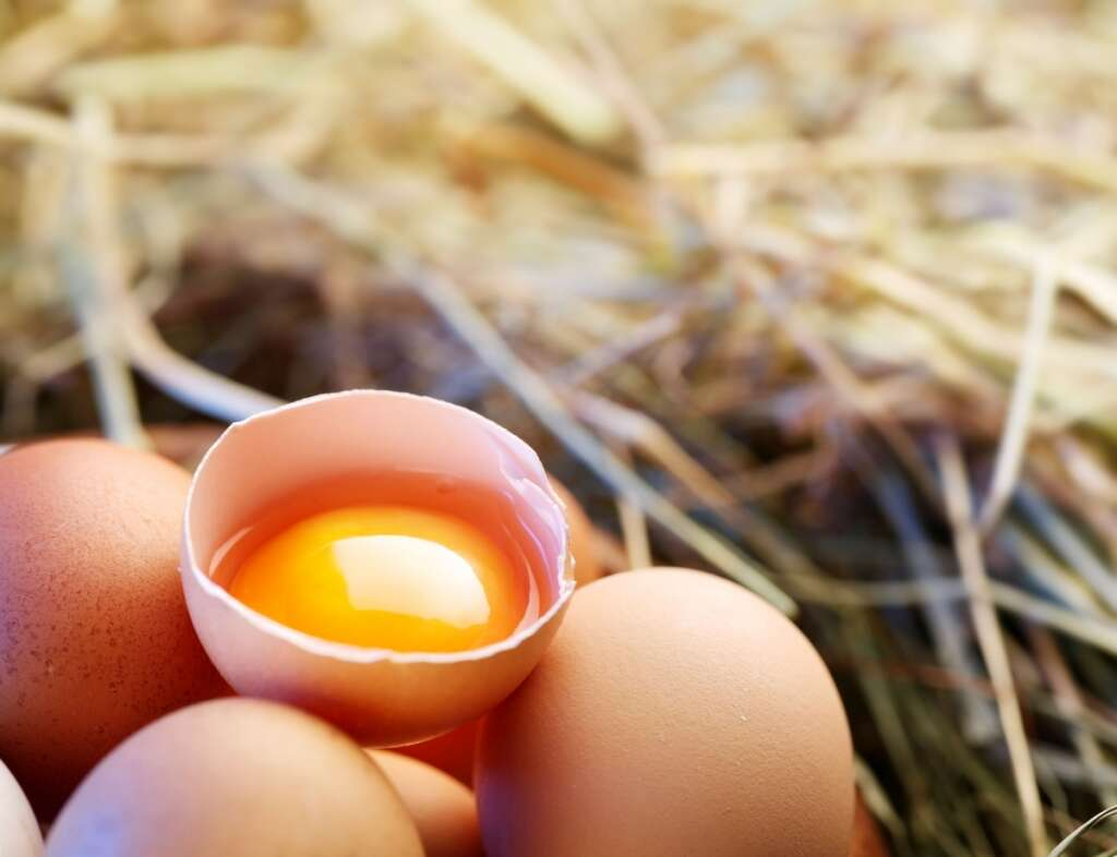 UAE bans eggs imported from US farm - News | Khaleej Times