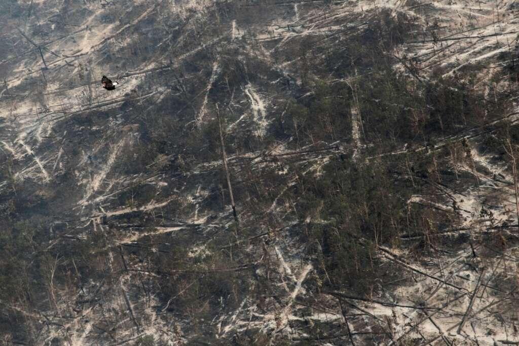 wildlife, world, Paris, population, plummets