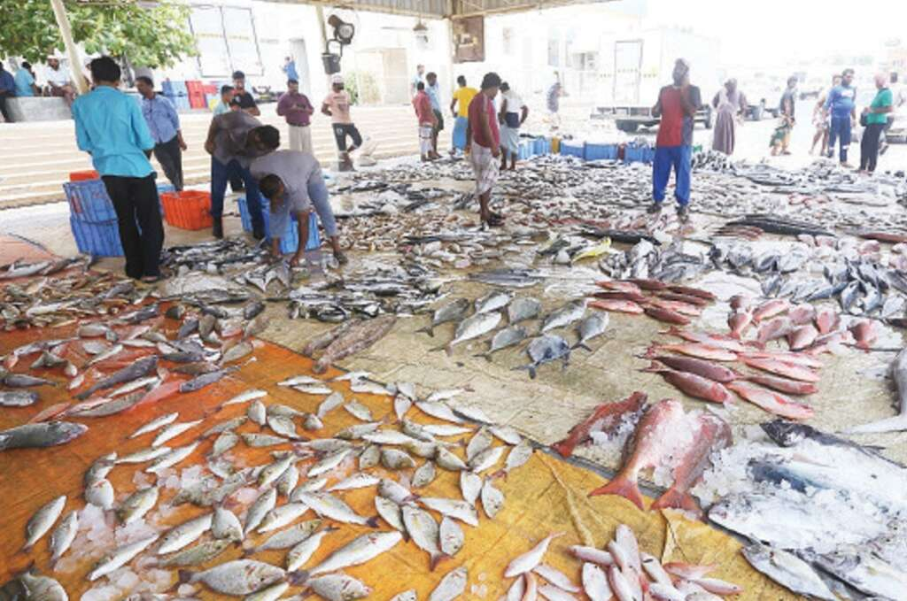 Ras Al Khaimah fishermen get their earnings via drones