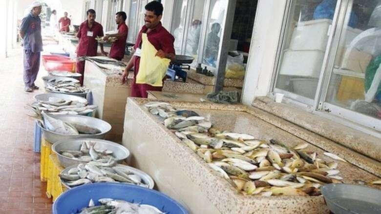 fish stocks, flourishing, fish, uae, sheri, emperor