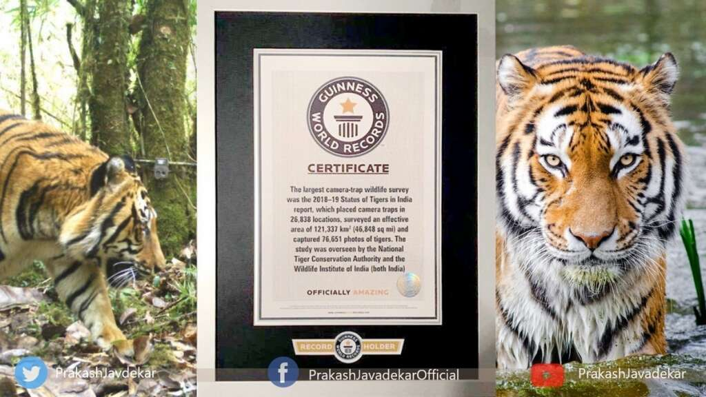Tiger census, Global Tiger Day, Guinness World Record
