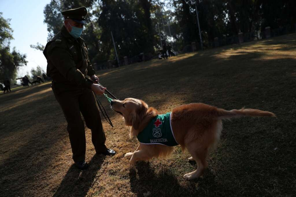 Chilean police, following, UAE, training, sniffer dogs, detect, coronavirus, Covid-19, people